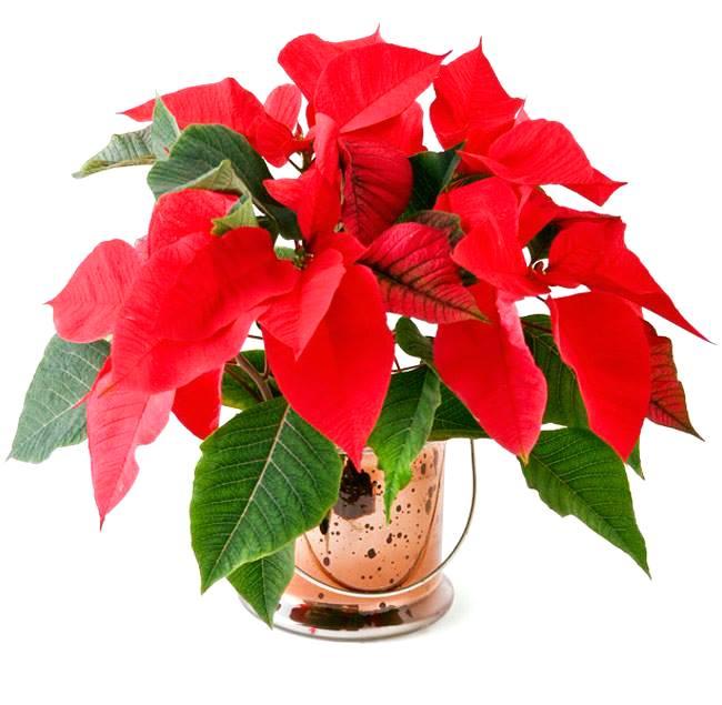 Mệnh Thổ nên trồng cây gì trong nhà hợp với mình Xem thêm tại: http://xemtuvi.mobi/xem-phong-thuy/phong-thuy-hoc-co-ban/menh-tho-nen-trong-cay-gi-trong-nha-hop-voi-minh.html
