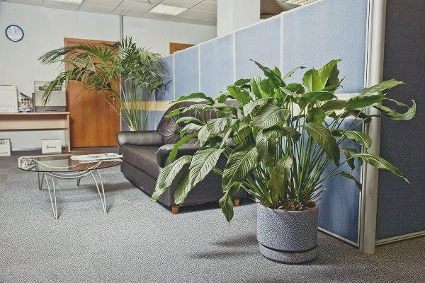 Bài trí cây xanh để tạo vượng khí cho văn phòng
