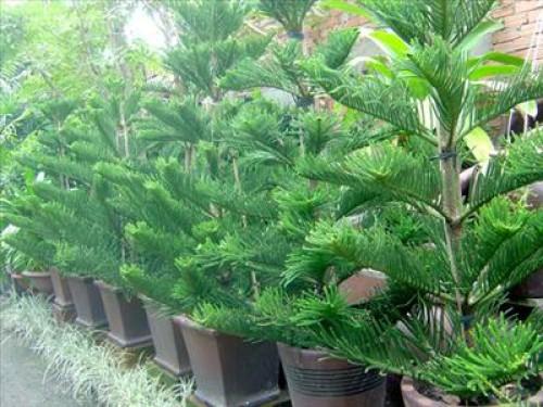 7 loại cây tuyệt đối không được trồng trong nhà để tránh điểm g