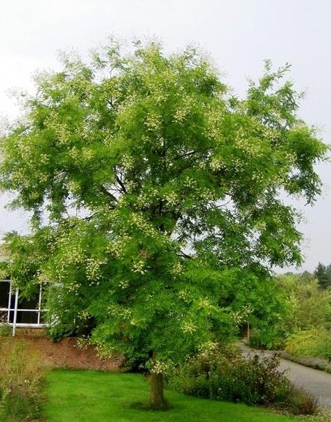 7 loại cây tuyệt đối không được trồng trong nhà để tránh điểm go