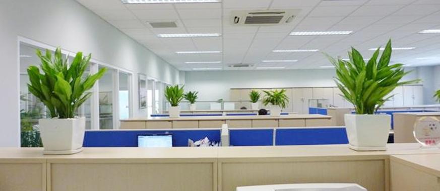 Cho thuê cây cảnh văn phòng tại quận tây hồ hà nội