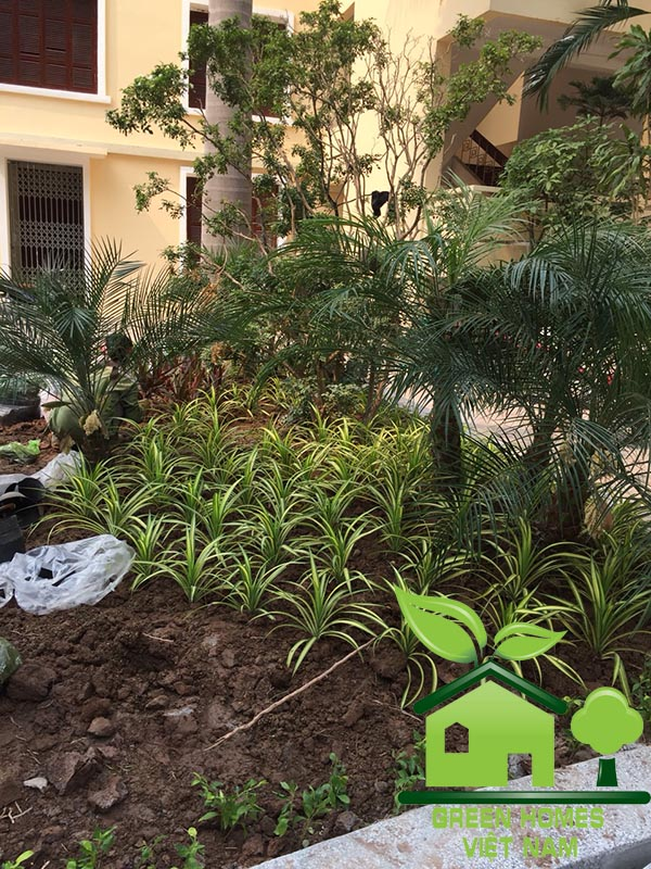 Dịch vụ thi công tiểu cảnh sân vườn tại học viện hành chính quốc gia