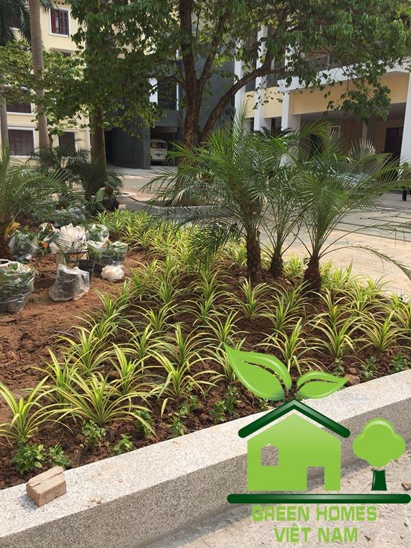Dự án cải tạo tiểu cảnh sân vườn