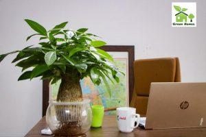Cây đặt bàn Green Homes Việt Nam